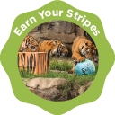 Earn Your Stripes - Level 2